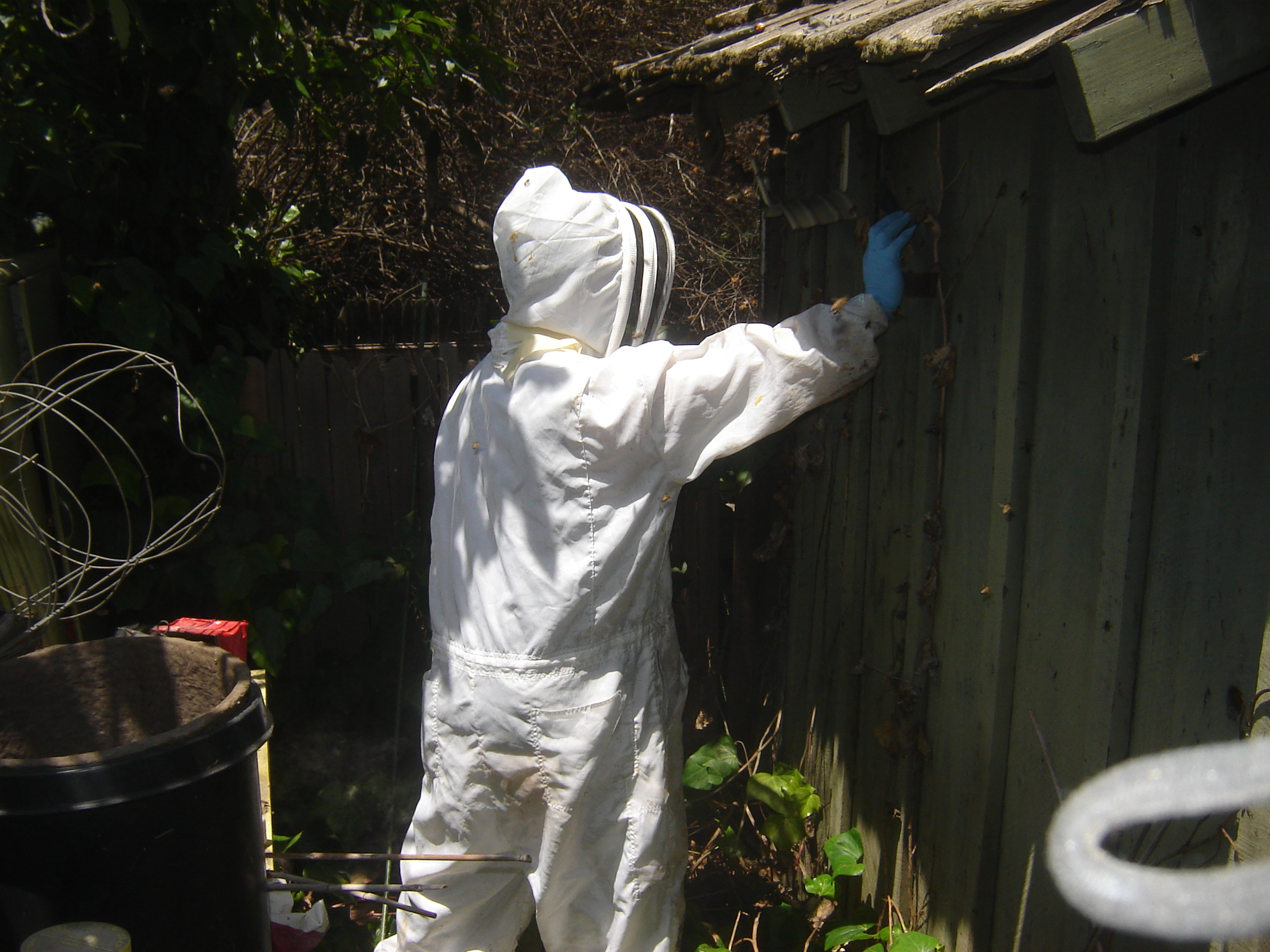 bee removal photo