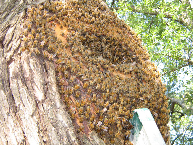 bees on tree trunk